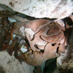 Descubren nueva especie de perezoso gigante en la Riviera Maya