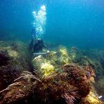 Localizan en Sisal, Península Maya, los restos de embarcaciones más antiguas