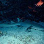 La cueva de los tiburones dormidos de Isla Mujeres