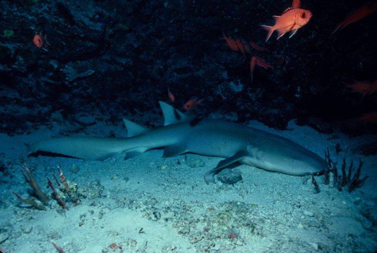 cueva de los tiburones dormidos 200418