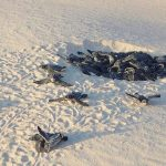 Liberan a 26 crías de tortuga laúd en Cancún