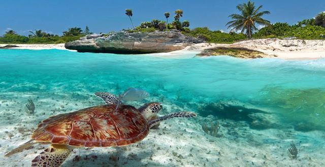 tortugas marinas 120218