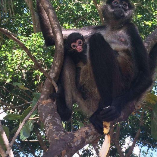 mono araña 310318