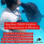 Otro delfín muere en Dolphinaris, denuncia Empty the Tanks