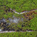 Consume incendio 1.5 hectáreas de Sian Kaan, hábitat del jaguar