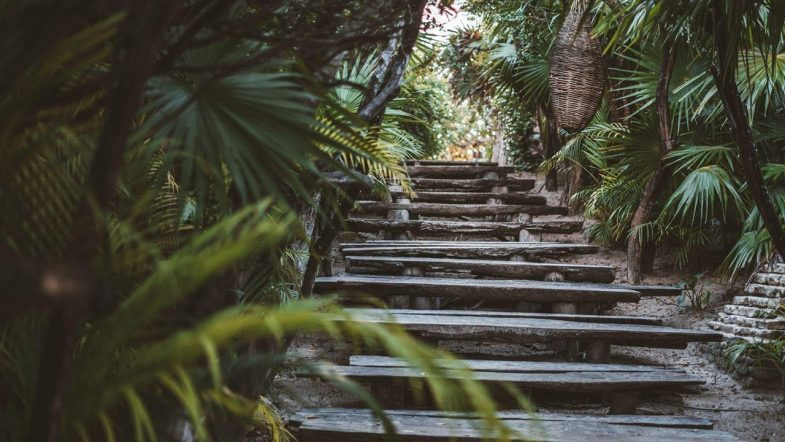 Selvazama, un nuevo despertar en Tulum